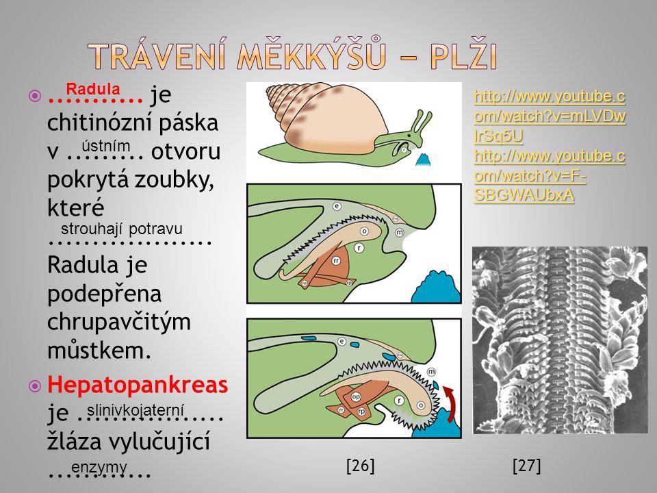 Trávení měkkýšů − plži