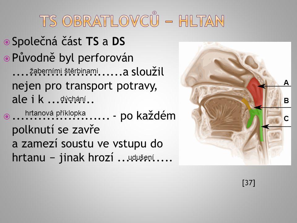Ts obratlovců − hltan Společná část TS a DS