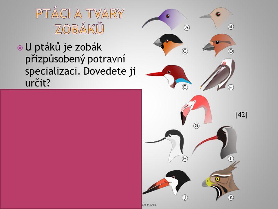 Ptáci a tvary zobáků U ptáků je zobák přizpůsobený potravní specializaci. Dovedete ji určit A – živí se nektarem (strdimilovití)