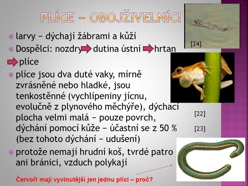 Plíce − obojživelníci larvy − dýchají žábrami a kůží