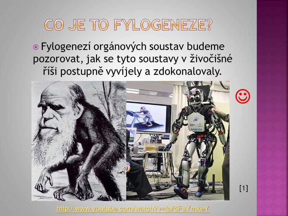 Co je to fylogeneze Fylogenezí orgánových soustav budeme pozorovat, jak se tyto soustavy v živočišné říši postupně vyvíjely a zdokonalovaly.