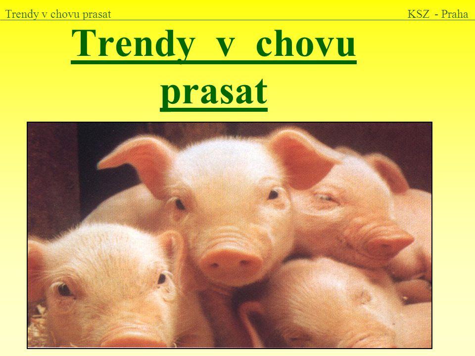 Trendy v chovu prasat KSZ - Praha