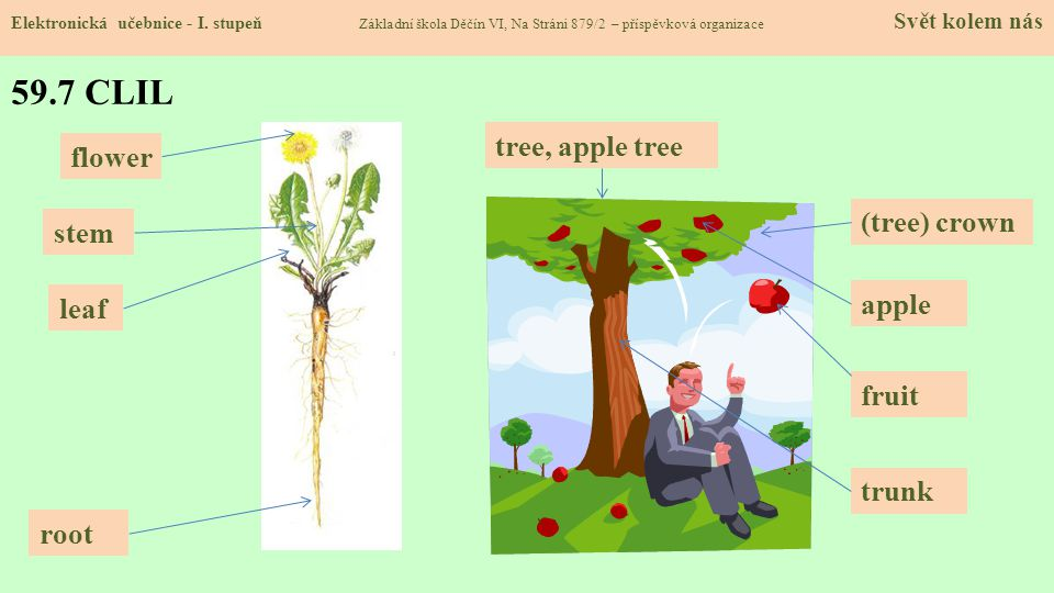 59.7 CLIL tree, apple tree flower (tree) crown stem apple leaf fruit