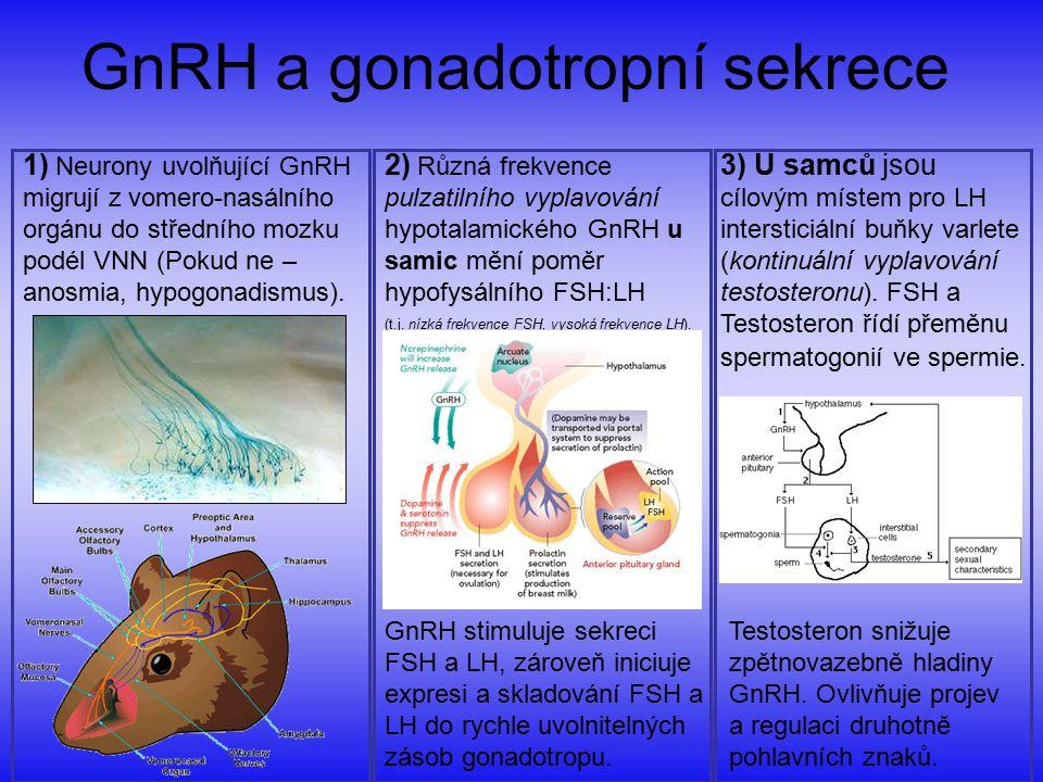 GnRH a gonadotropní sekrece