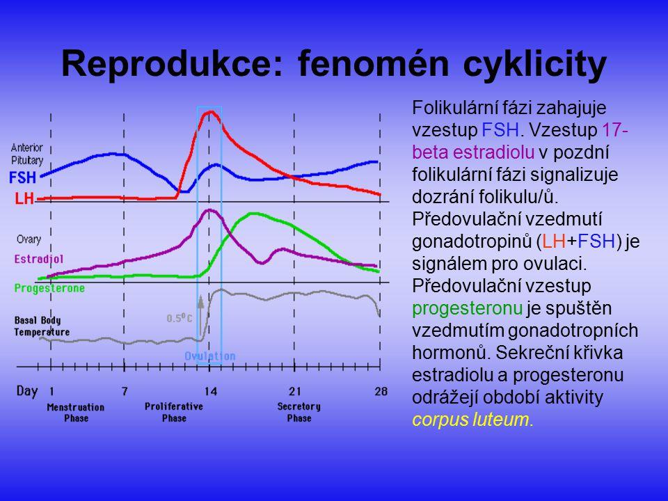 Reprodukce: fenomén cyklicity