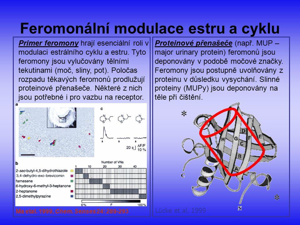 Feromonální modulace estru a cyklu