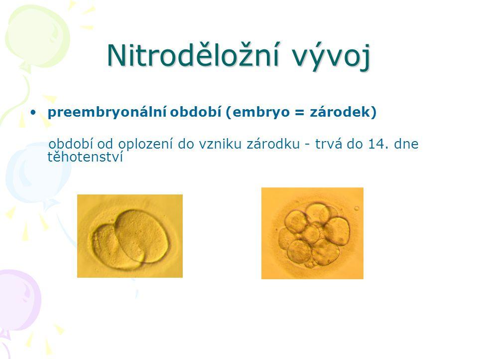 Nitroděložní vývoj preembryonální období (embryo = zárodek)