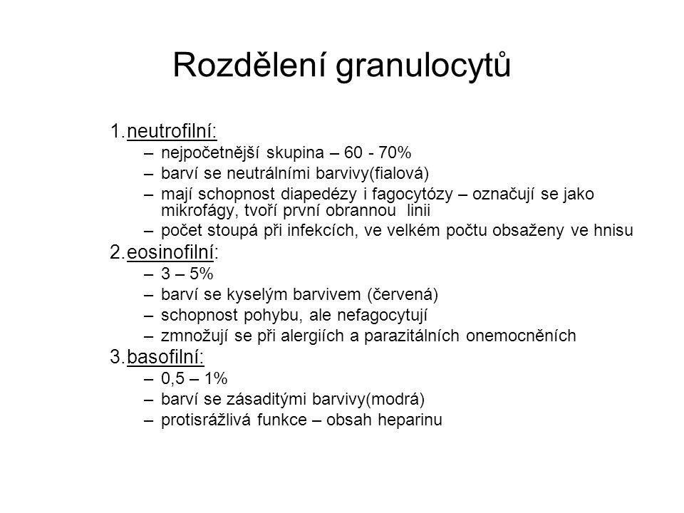 Rozdělení granulocytů