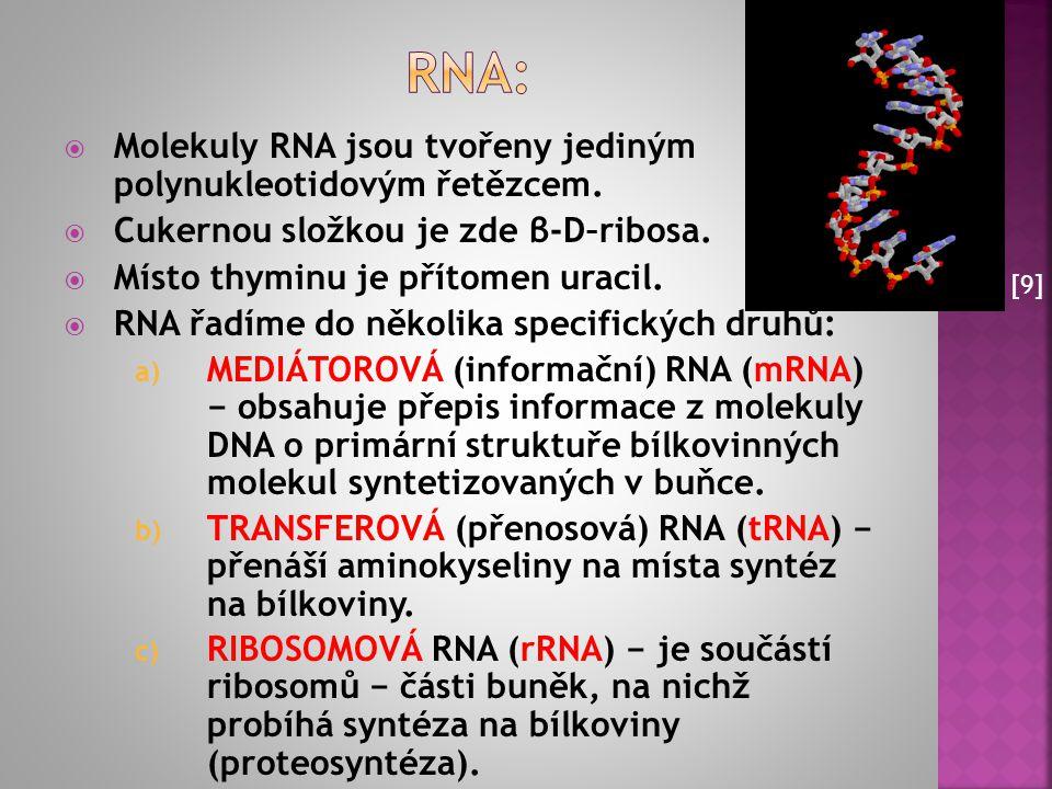 Rna: Molekuly RNA jsou tvořeny jediným polynukleotidovým řetězcem.