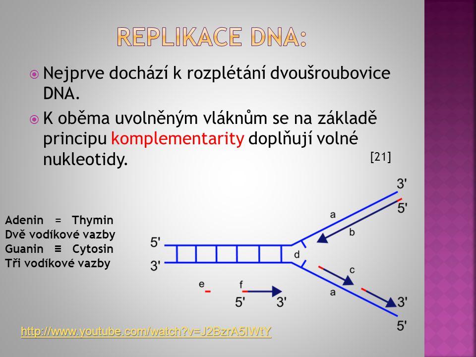 Replikace dna: Nejprve dochází k rozplétání dvoušroubovice DNA.