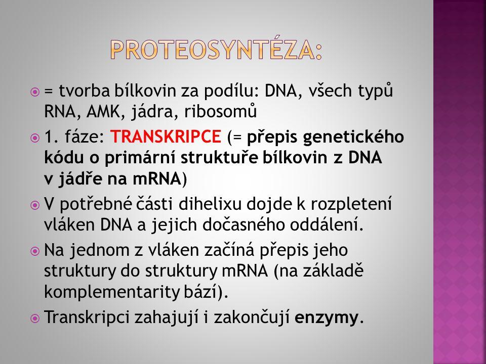 proteosyntéza: = tvorba bílkovin za podílu: DNA, všech typů RNA, AMK, jádra, ribosomů.