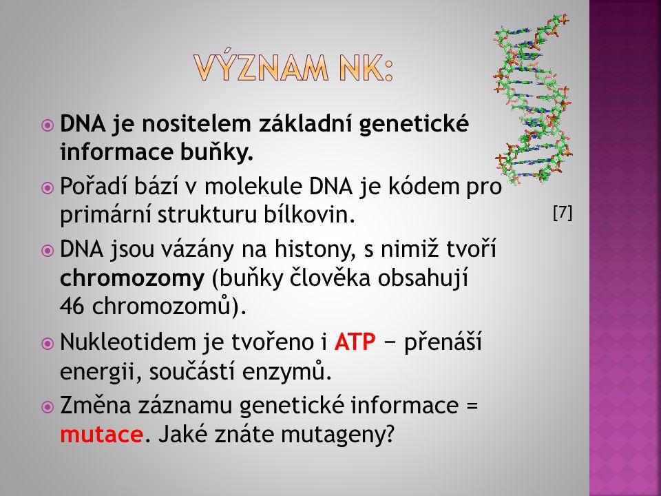 VÝZNAM NK: DNA je nositelem základní genetické informace buňky.