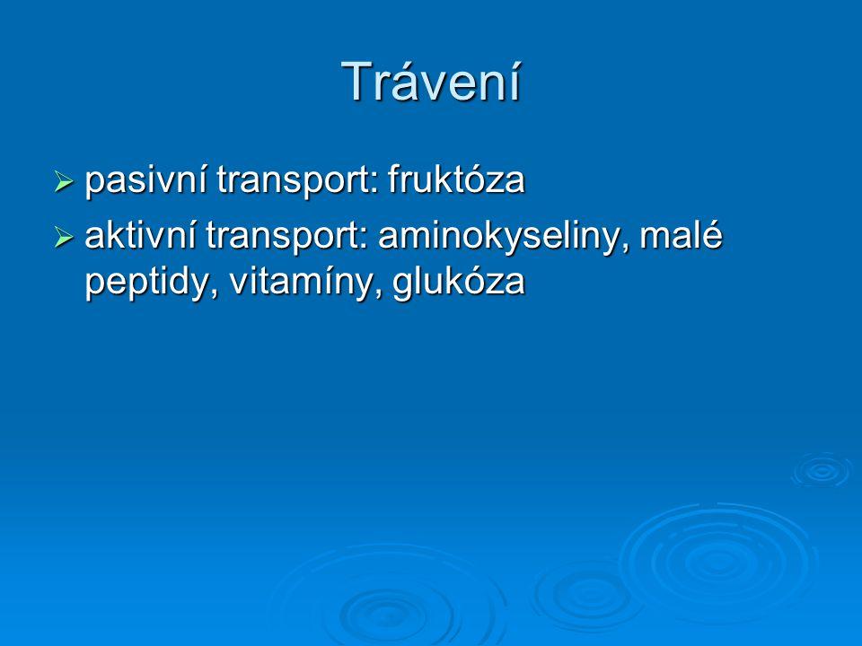 Trávení pasivní transport: fruktóza