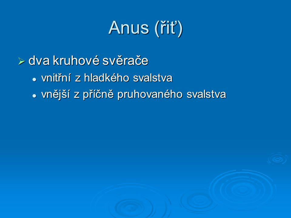 Anus (řiť) dva kruhové svěrače vnitřní z hladkého svalstva