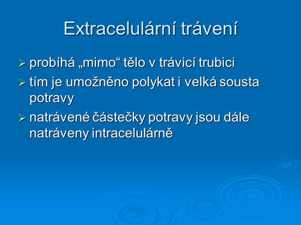 Extracelulární trávení