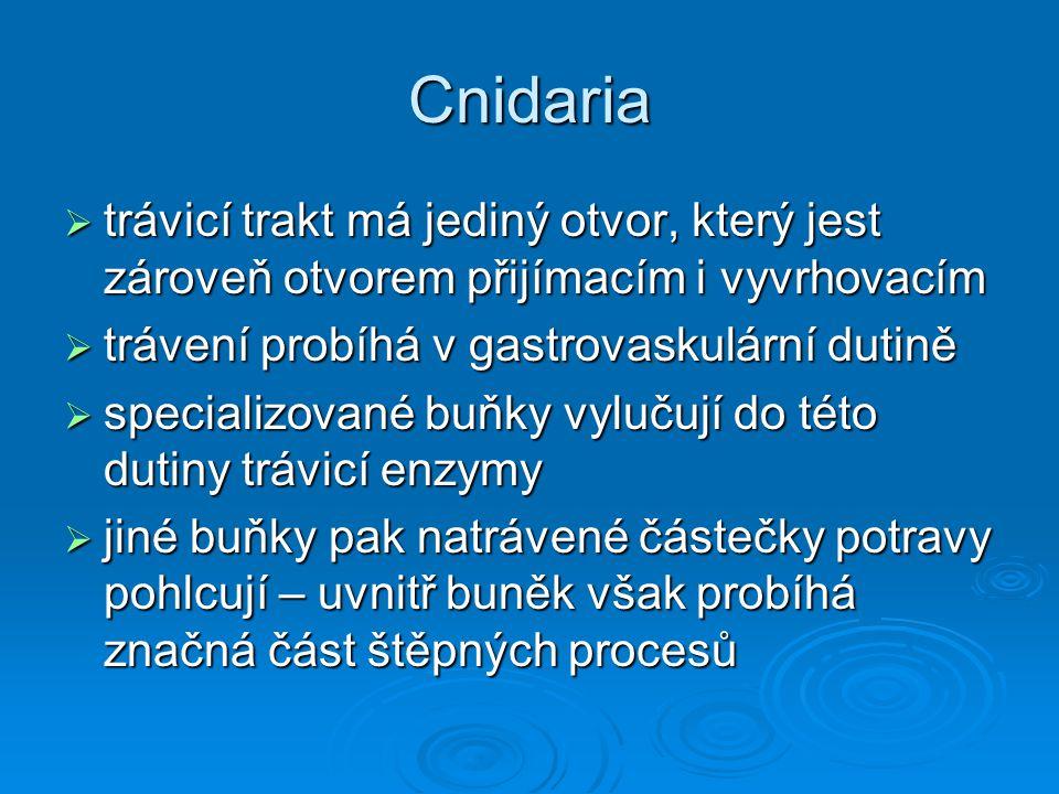 Cnidaria trávicí trakt má jediný otvor, který jest zároveň otvorem přijímacím i vyvrhovacím. trávení probíhá v gastrovaskulární dutině.