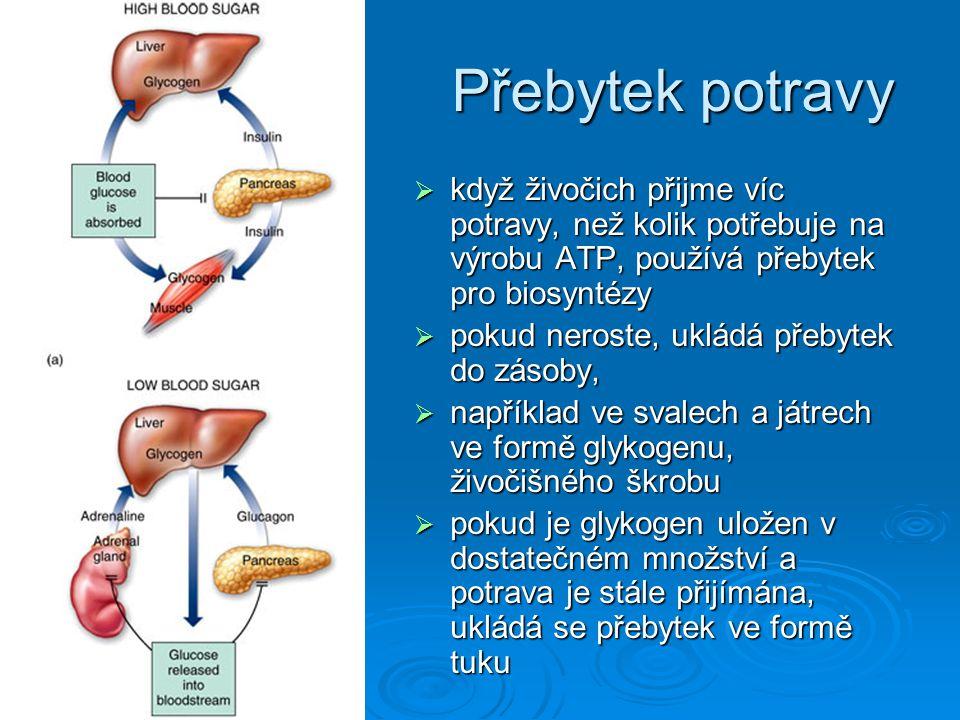 Přebytek potravy když živočich přijme víc potravy, než kolik potřebuje na výrobu ATP, používá přebytek pro biosyntézy.