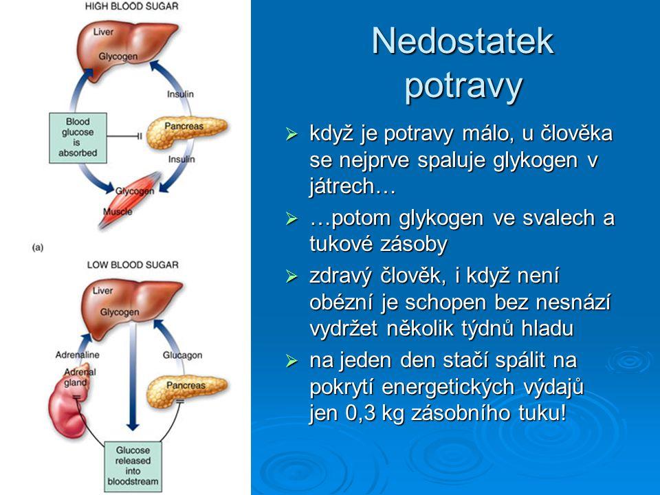 Nedostatek potravy když je potravy málo, u člověka se nejprve spaluje glykogen v játrech… …potom glykogen ve svalech a tukové zásoby.