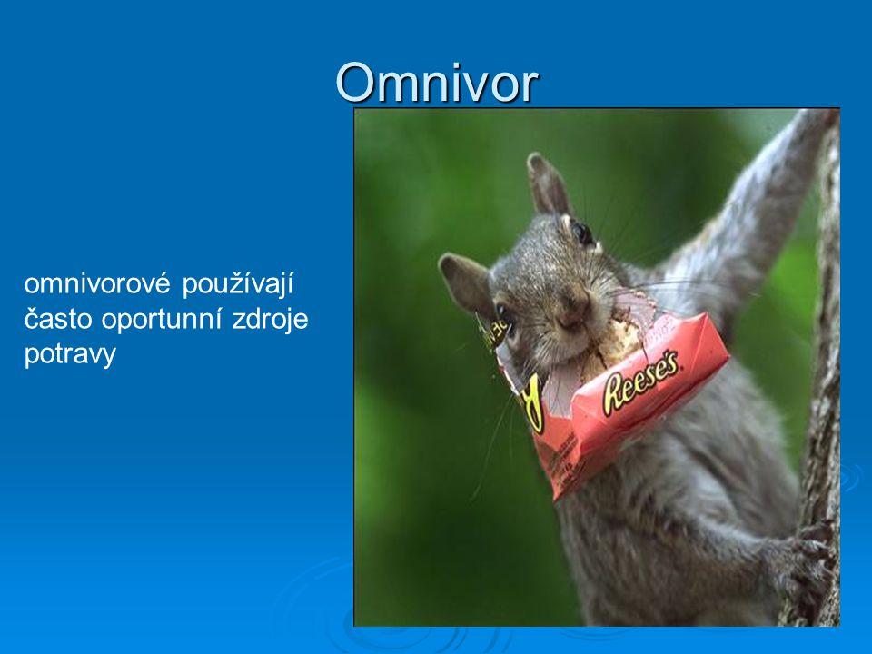 Omnivor omnivorové používají často oportunní zdroje potravy