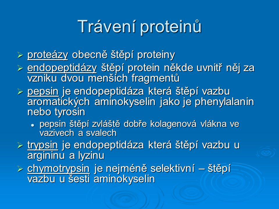 Trávení proteinů proteázy obecně štěpí proteiny