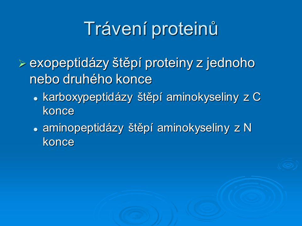 Trávení proteinů exopeptidázy štěpí proteiny z jednoho nebo druhého konce. karboxypeptidázy štěpí aminokyseliny z C konce.
