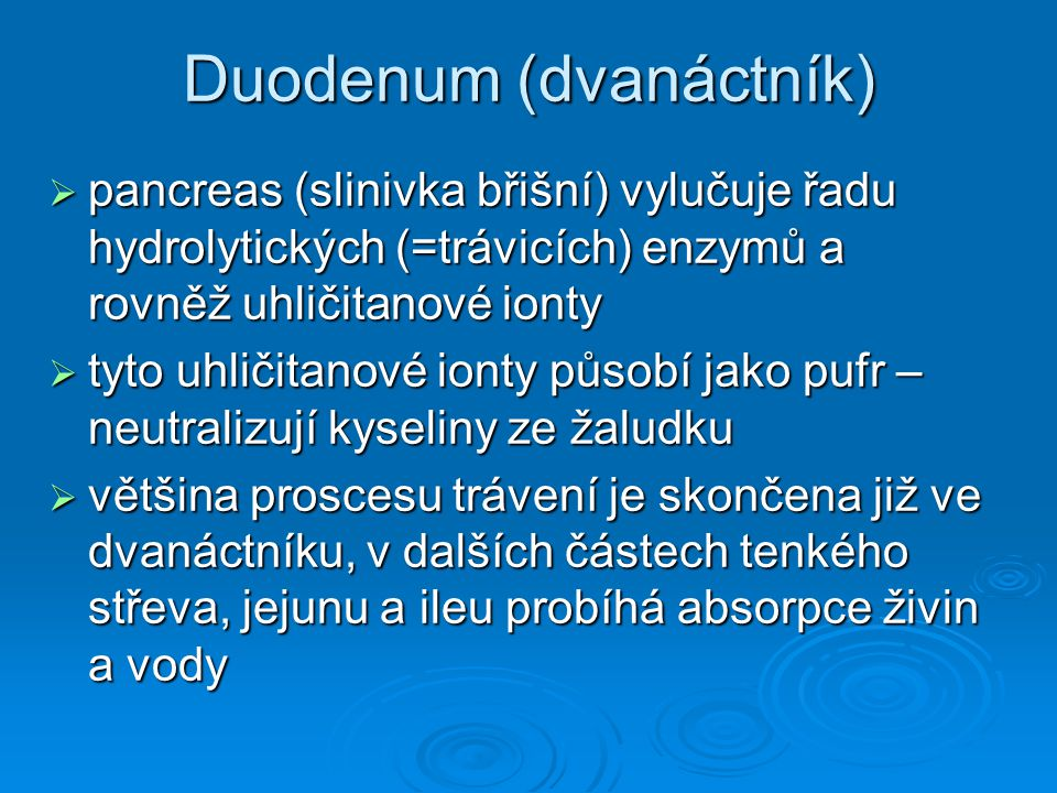 Duodenum (dvanáctník)