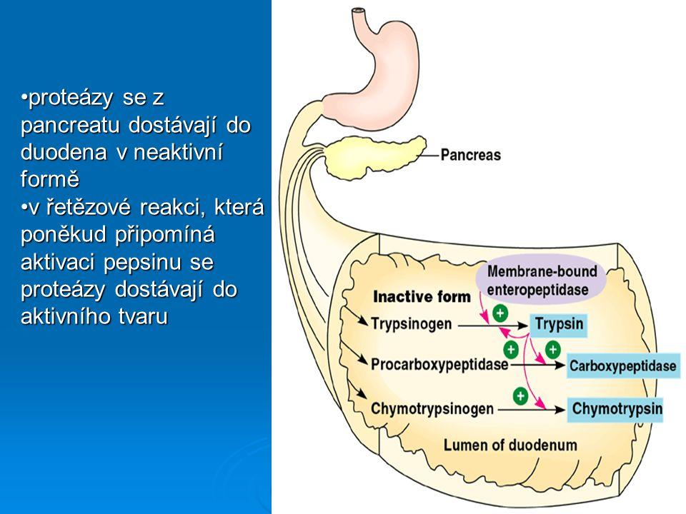 proteázy se z pancreatu dostávají do duodena v neaktivní formě