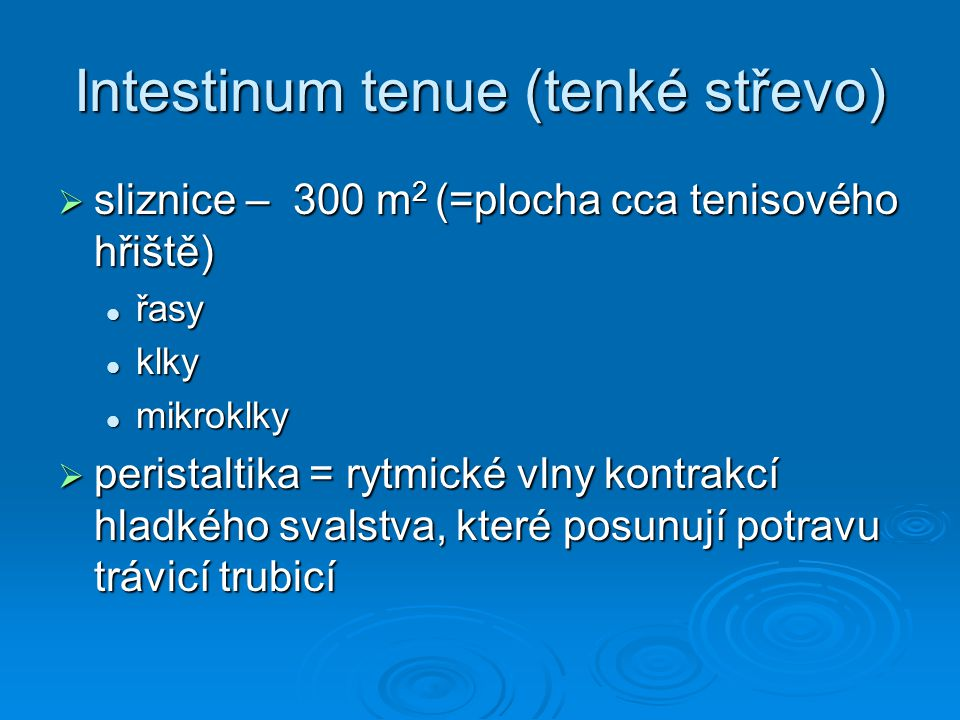 Intestinum tenue (tenké střevo)