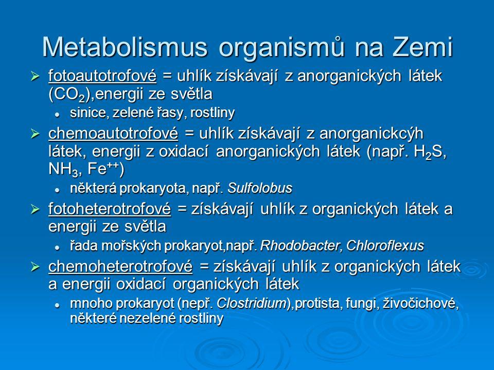 Metabolismus organismů na Zemi