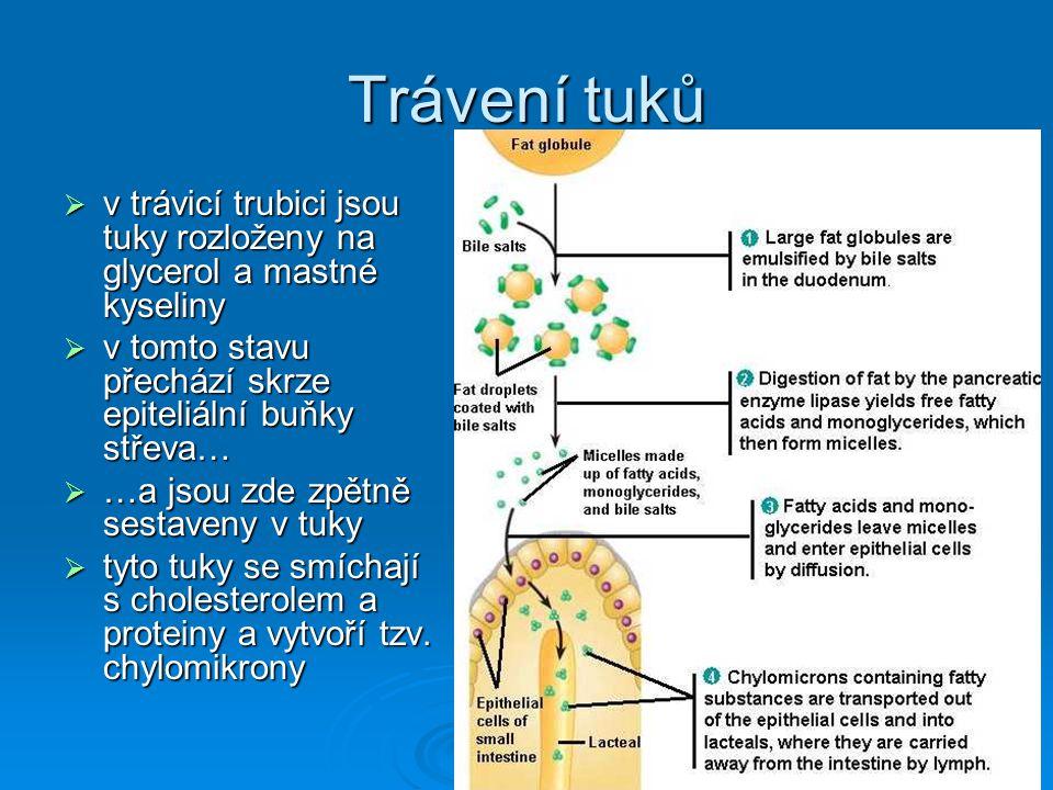 Trávení tuků v trávicí trubici jsou tuky rozloženy na glycerol a mastné kyseliny. v tomto stavu přechází skrze epiteliální buňky střeva…
