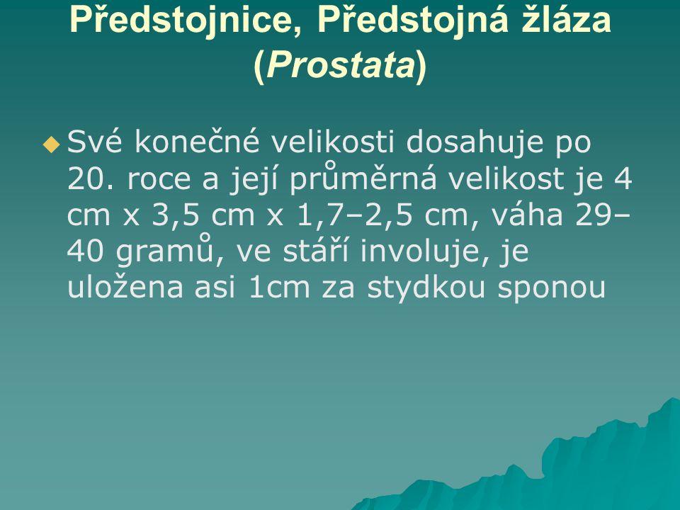 Předstojnice, Předstojná žláza (Prostata)