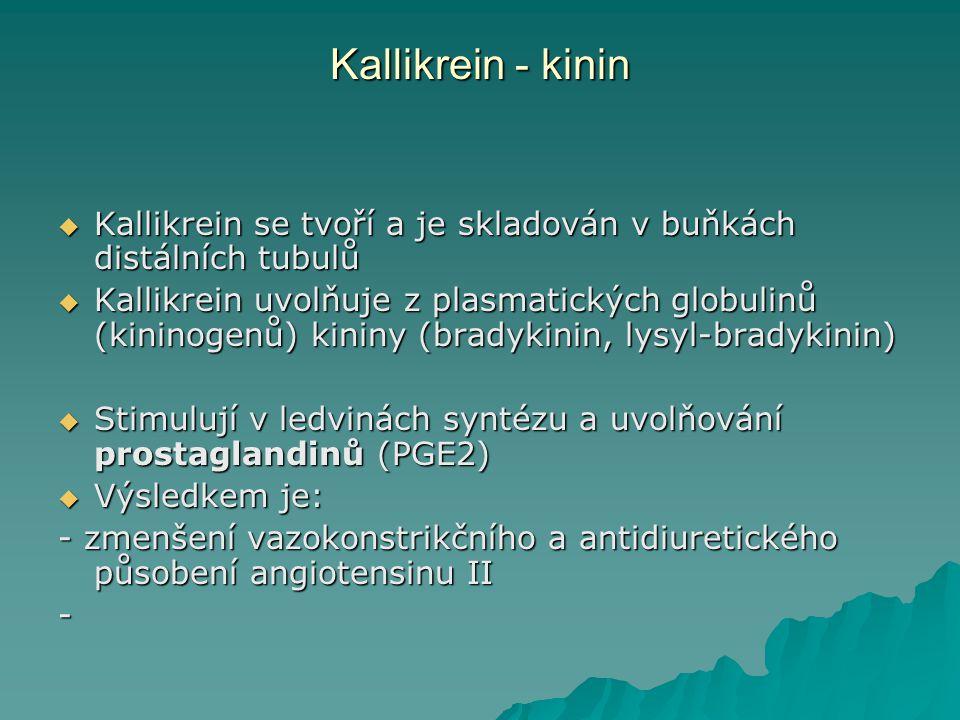 Kallikrein - kinin Kallikrein se tvoří a je skladován v buňkách distálních tubulů.