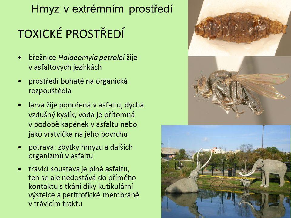 Hmyz v extrémním prostředí
