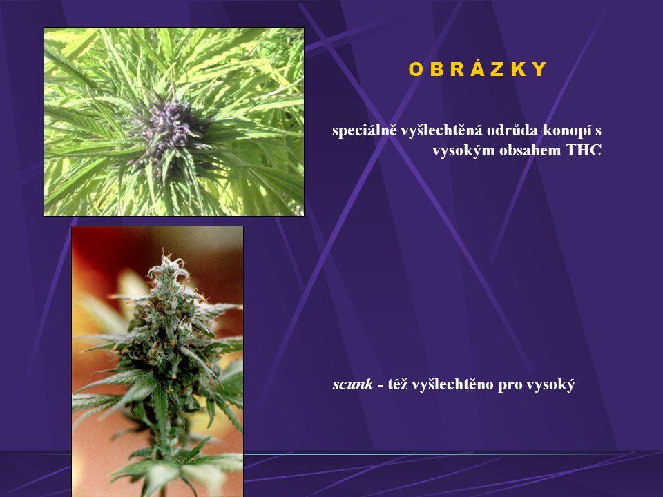O B R Á Z K Y speciálně vyšlechtěná odrůda konopí s vysokým obsahem THC.
