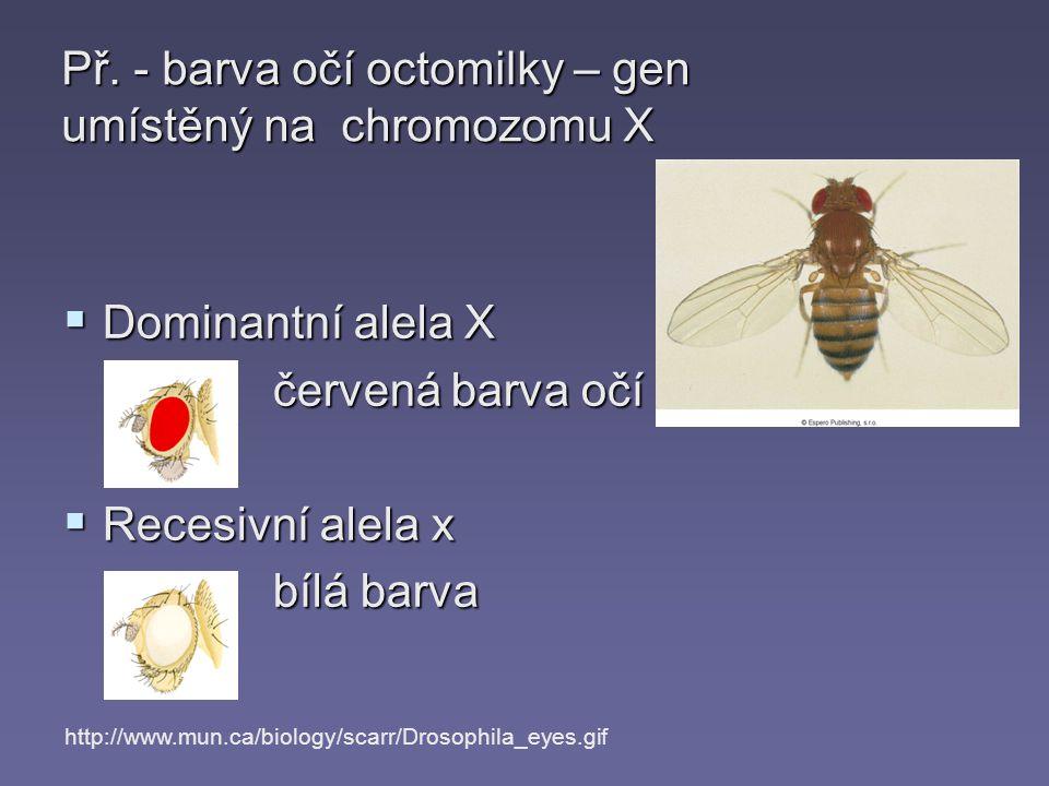 Př. - barva očí octomilky – gen umístěný na chromozomu X
