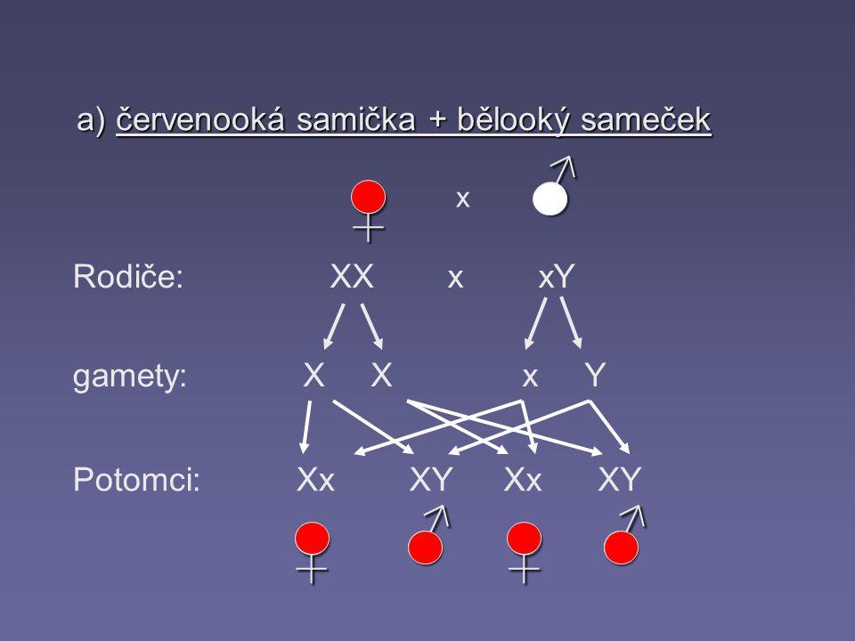 ♂ ♀ ♂ ♂ ♀ ♀ a) červenooká samička + bělooký sameček Rodiče: XX x xY