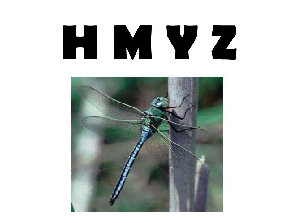 H M Y Z