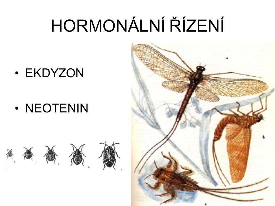 HORMONÁLNÍ ŘÍZENÍ EKDYZON NEOTENIN