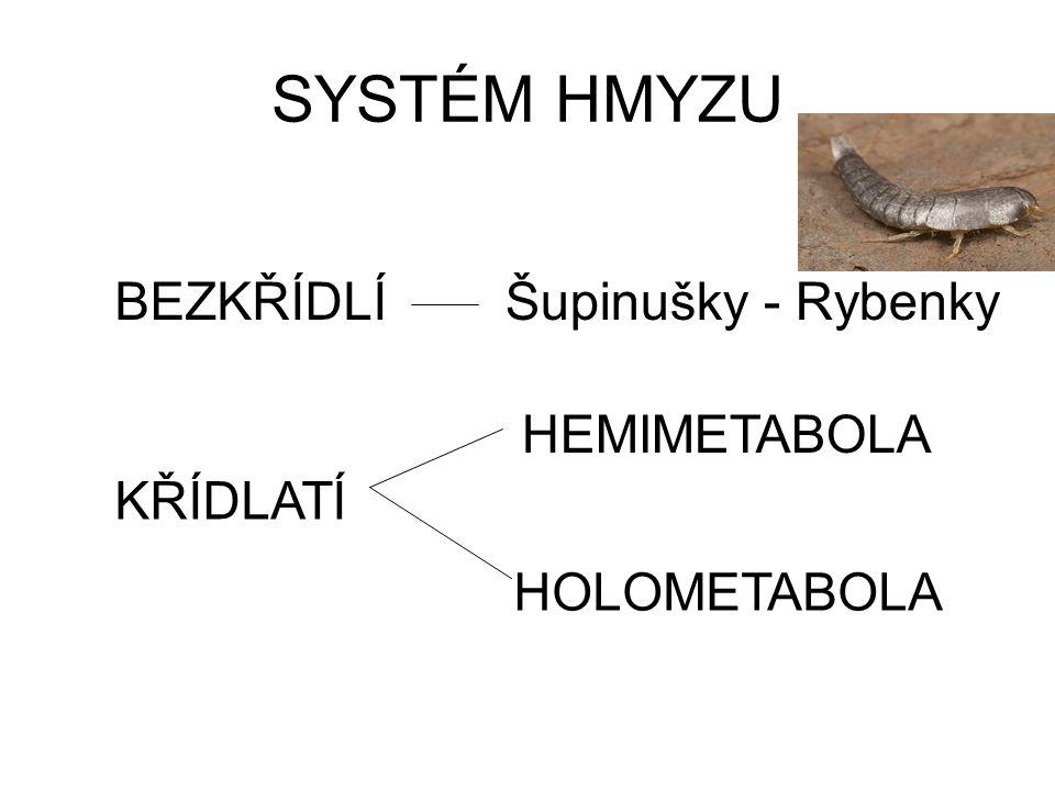 SYSTÉM HMYZU BEZKŘÍDLÍ Šupinušky - Rybenky HEMIMETABOLA KŘÍDLATÍ
