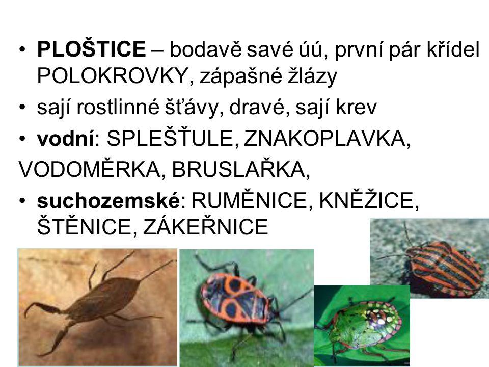 PLOŠTICE – bodavě savé úú, první pár křídel POLOKROVKY, zápašné žlázy