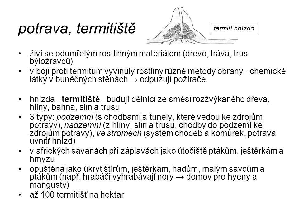 potrava, termitiště termití hnízdo. živí se odumřelým rostlinným materiálem (dřevo, tráva, trus býložravců)
