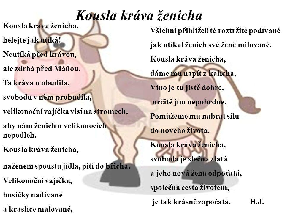 Kousla kráva ženicha Kousla kráva ženicha, helejte jak utíká!