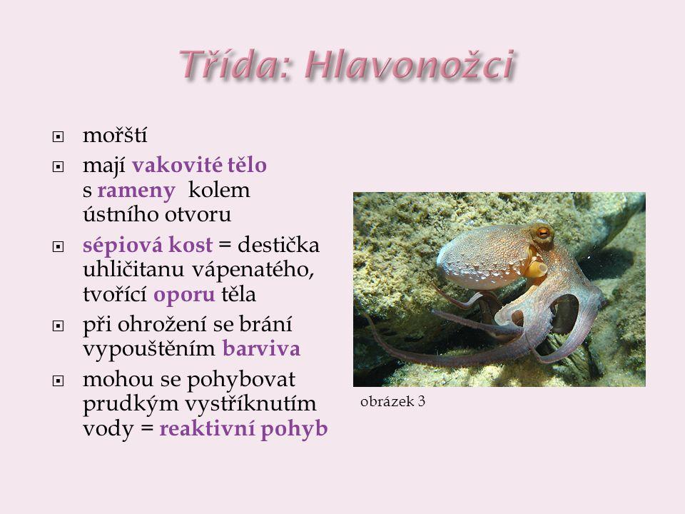 Třída: Hlavonožci mořští