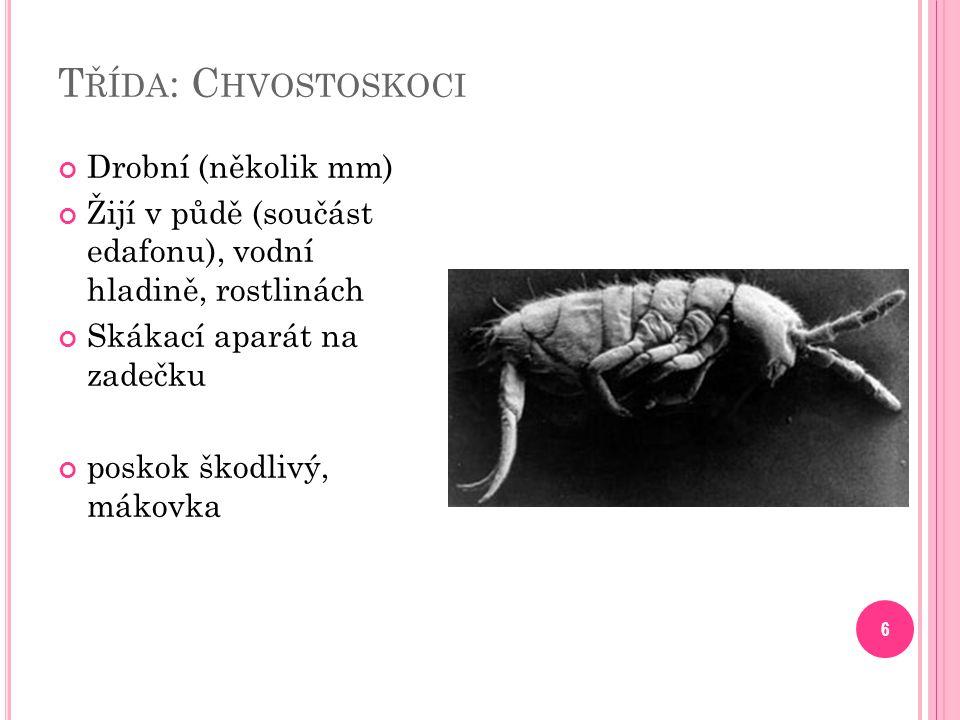 Třída: Chvostoskoci Drobní (několik mm)