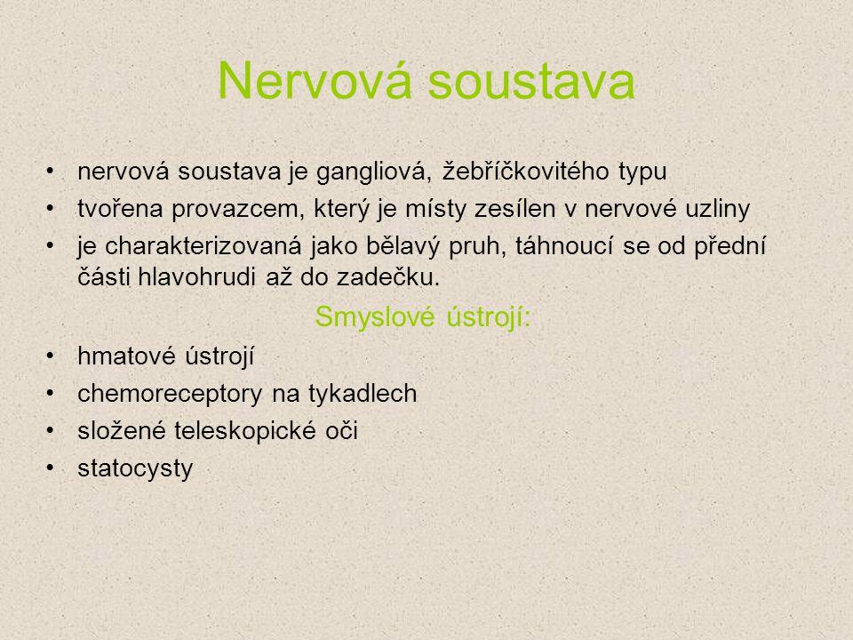 Nervová soustava Smyslové ústrojí: