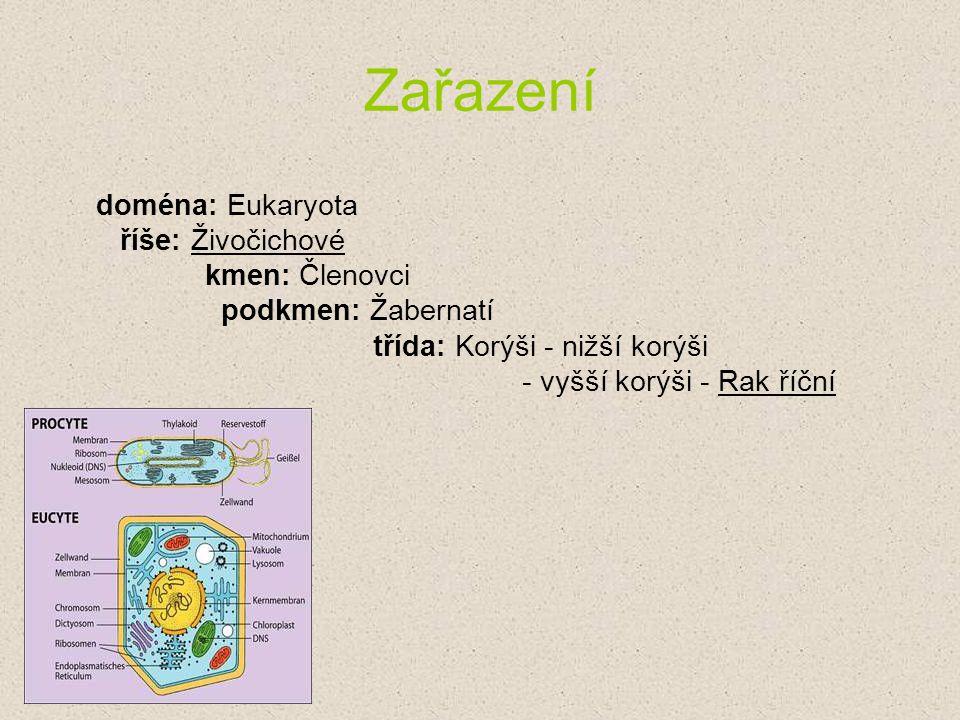 Zařazení doména: Eukaryota
