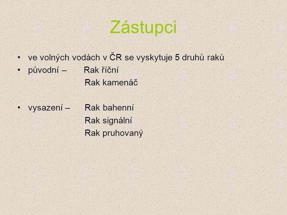 Zástupci ve volných vodách v ČR se vyskytuje 5 druhů raků