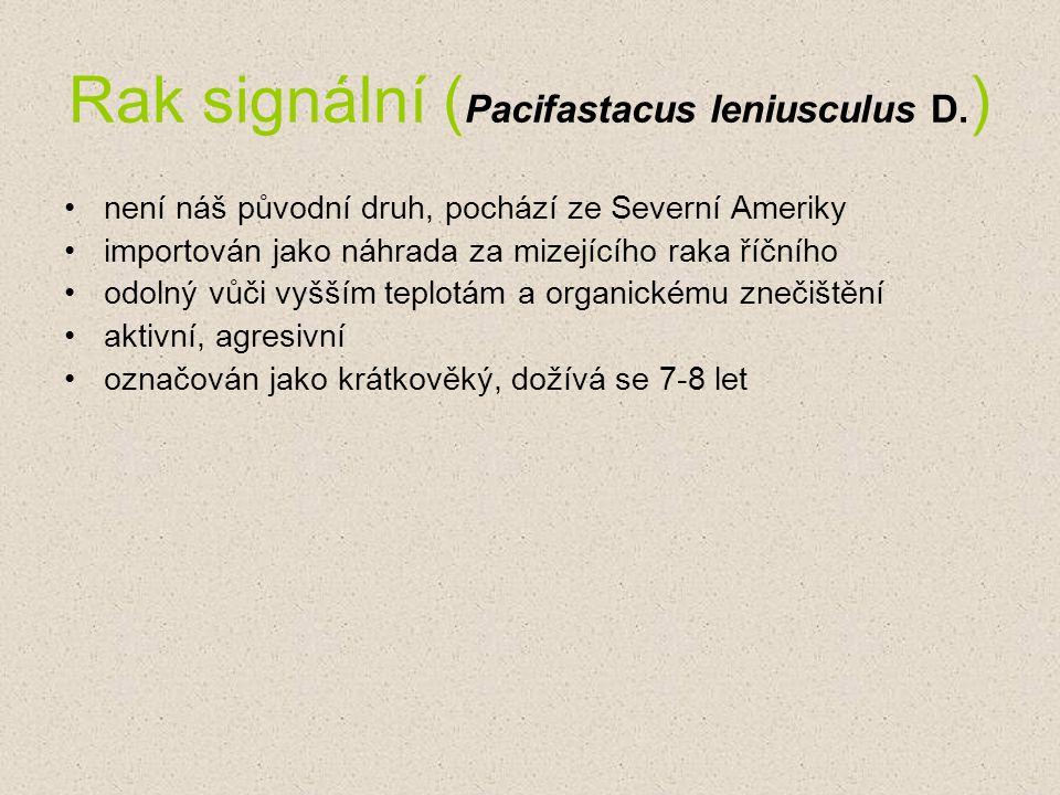 Rak signální (Pacifastacus leniusculus D.)