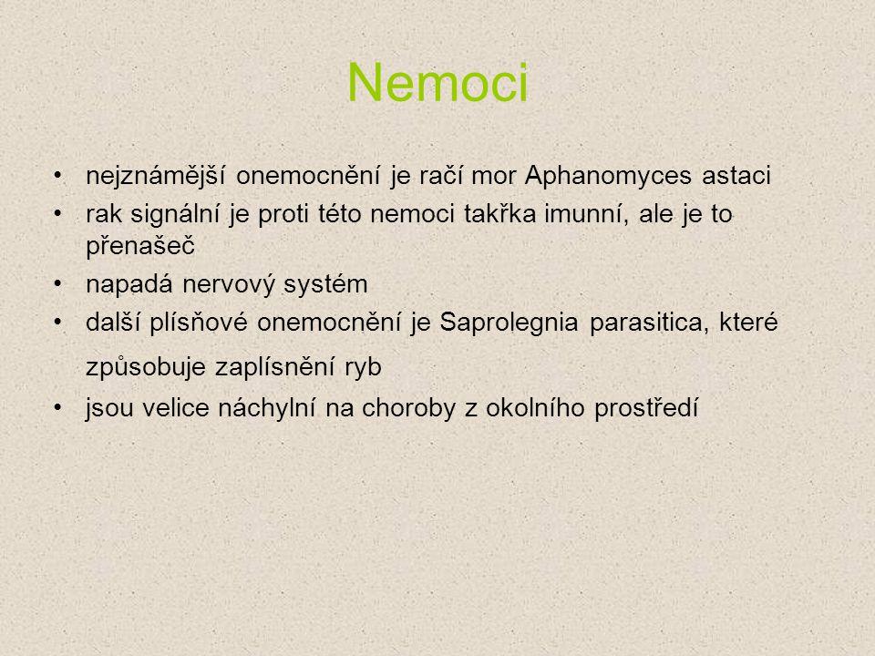 Nemoci nejznámější onemocnění je račí mor Aphanomyces astaci