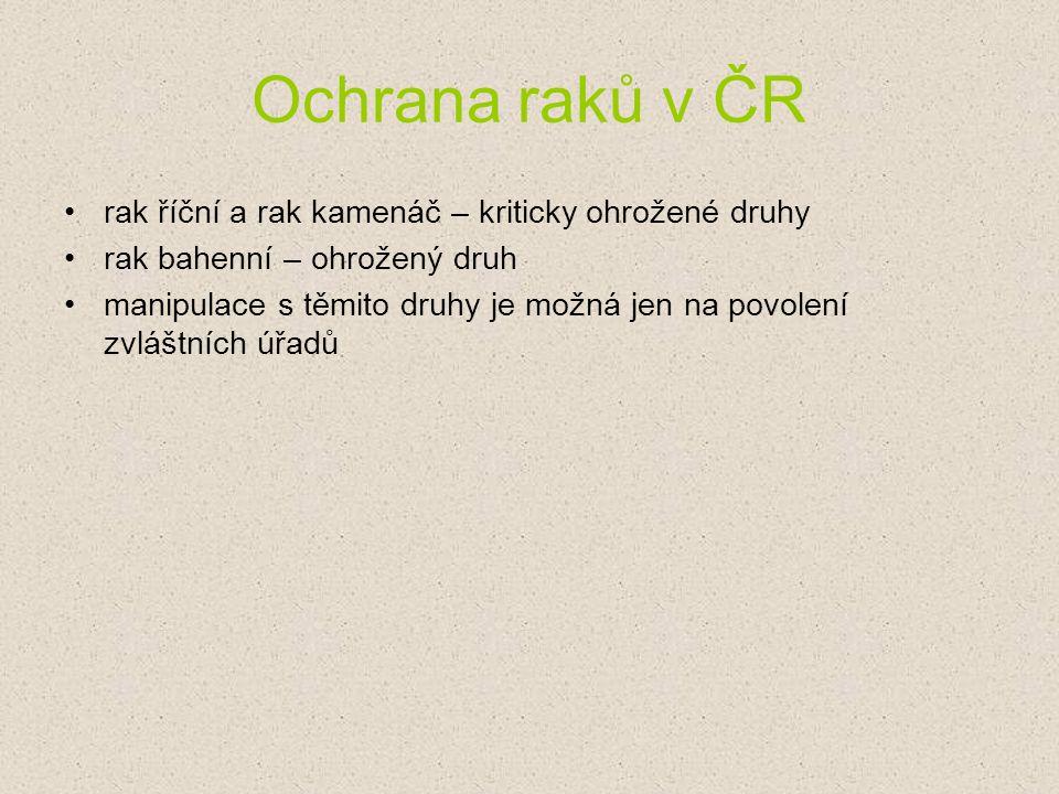 Ochrana raků v ČR rak říční a rak kamenáč – kriticky ohrožené druhy
